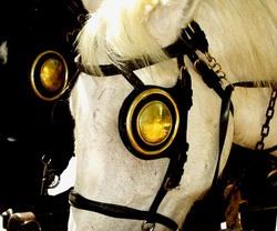Papjancsi és a vak ló